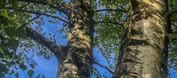 Auf die Bäume, fertig, los! | Kindertagesstätte Zwappel Solingen Wald